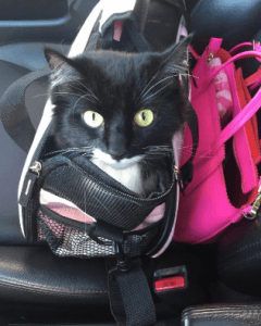 Pettom Pet Carrier