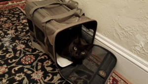 Sherpa deluxe pet carrier
