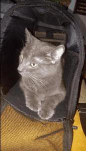 Pettom Pet Carrier