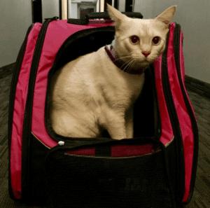Pet Gear I-GO2 Traveler Roller Backpack