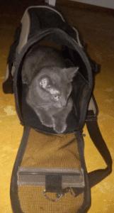 Pettom Pet Carrier Review
