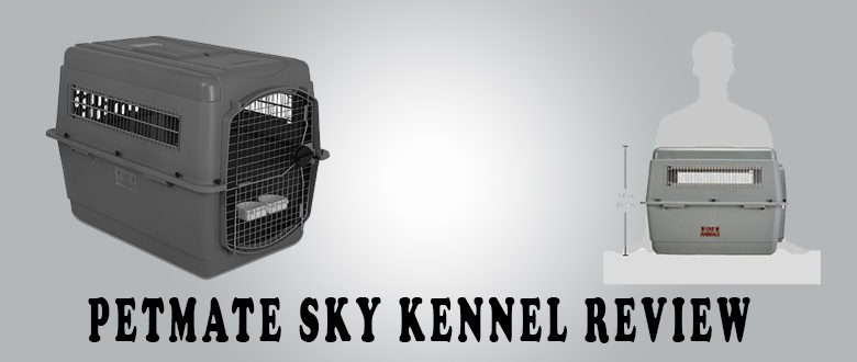 Petmate Sky Kennel-Your Cats Will Love It!
