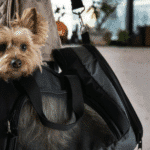These Are The Best Pet Carrier Purses For All Time Use