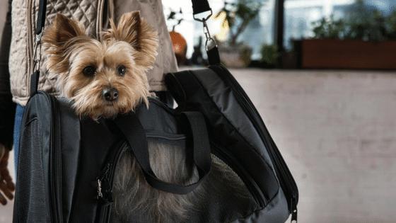 pet carrier purse