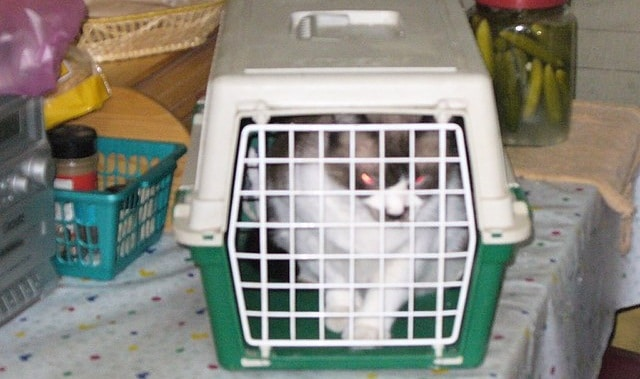 cat carrier size guide