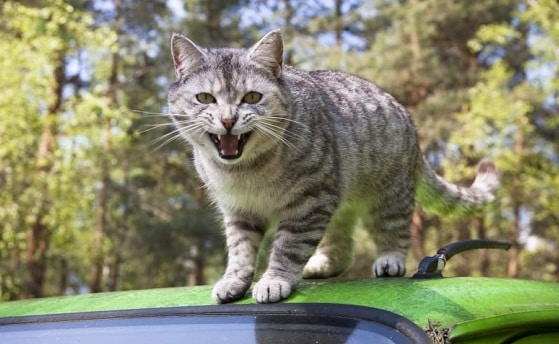 how to keep cats safe in car