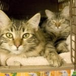 Different Types of Cat Carrier: Which One Should You Choose?