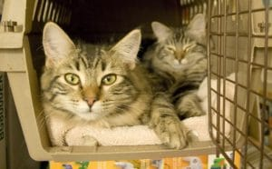types of cat carrier