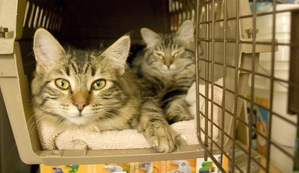 how to disinfect a cat carrier