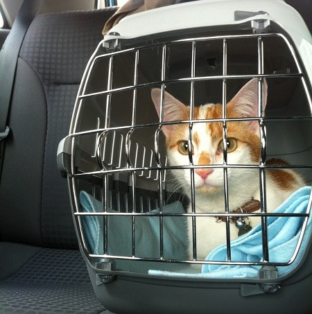 Where To Put The Cat Carrier In A Car