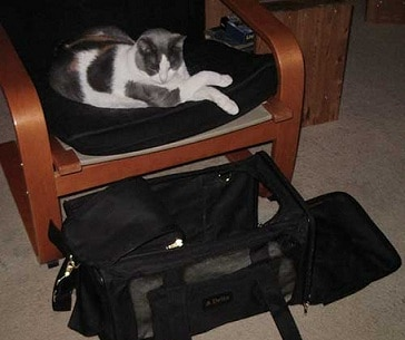 Airline Approved Pet Carrier For 2 Cats