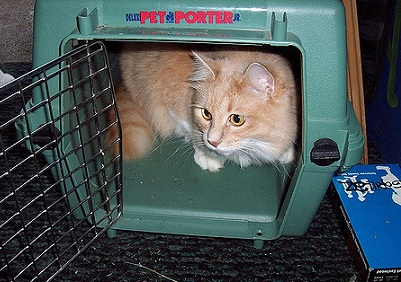 How Much Does A Cat Carrier Weigh