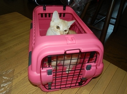 How To Clean Cat Urine From Carrier