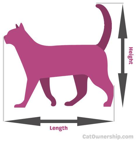cat measurement guide