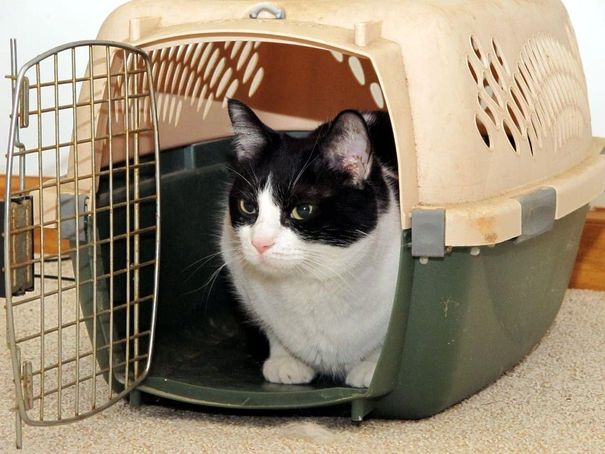 how-to-clean-a-cat-carrier