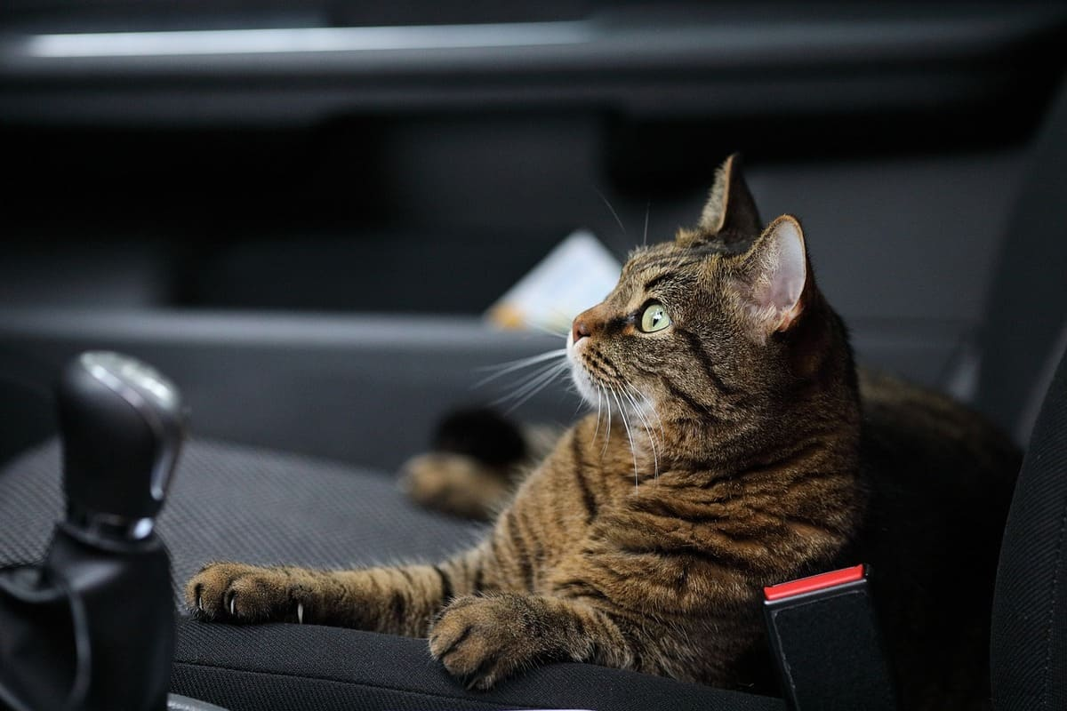 travel-with-a-cat