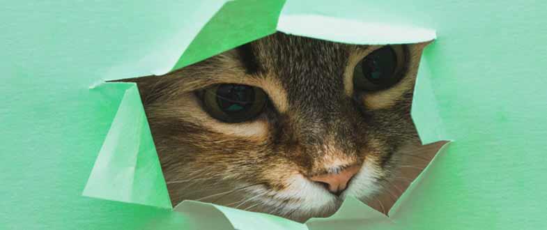register cat